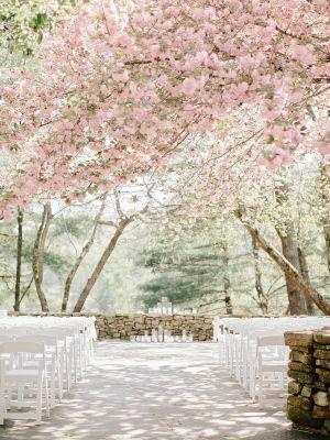 Выездная церемония в цветущем саду